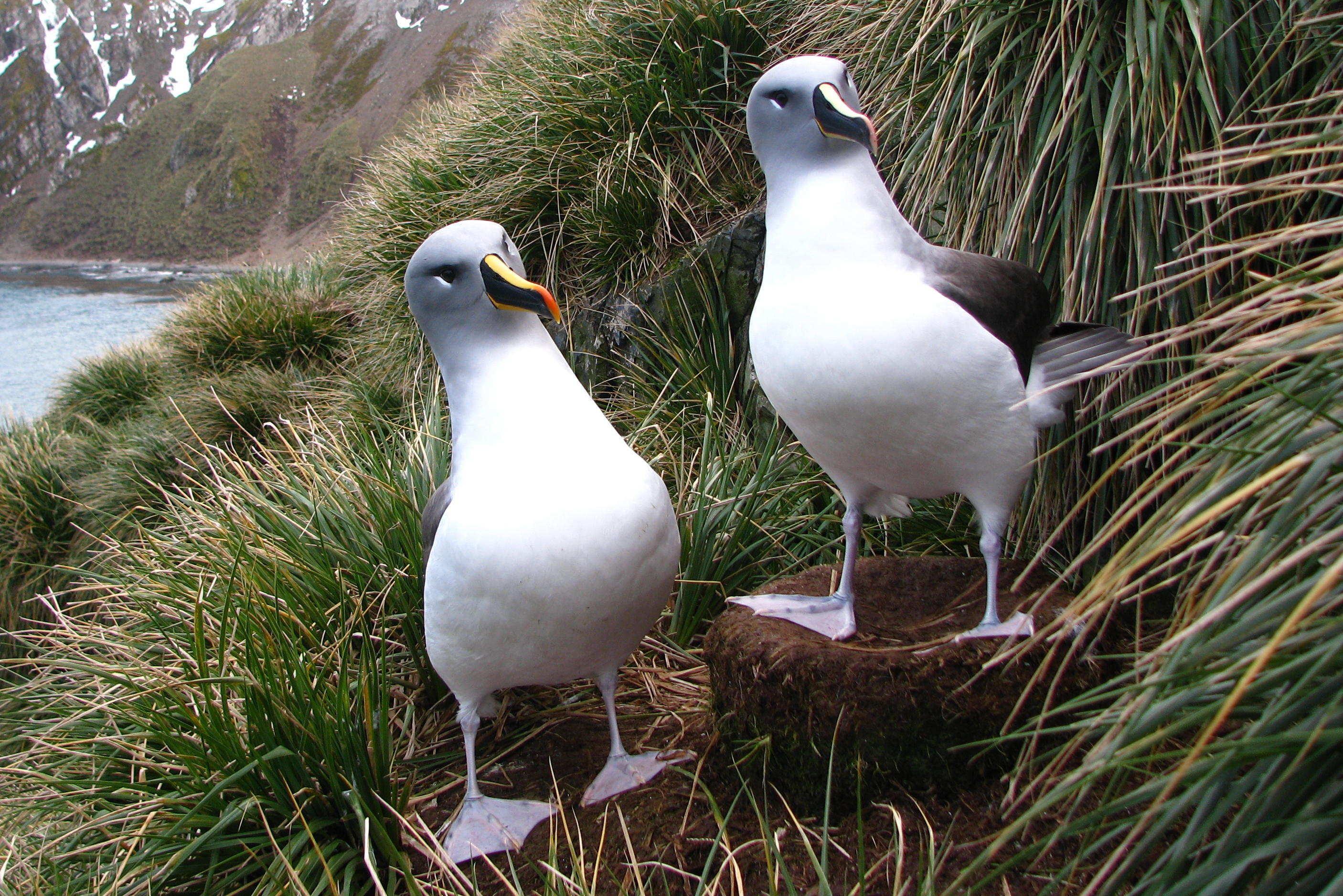 stiati_ca_albatros