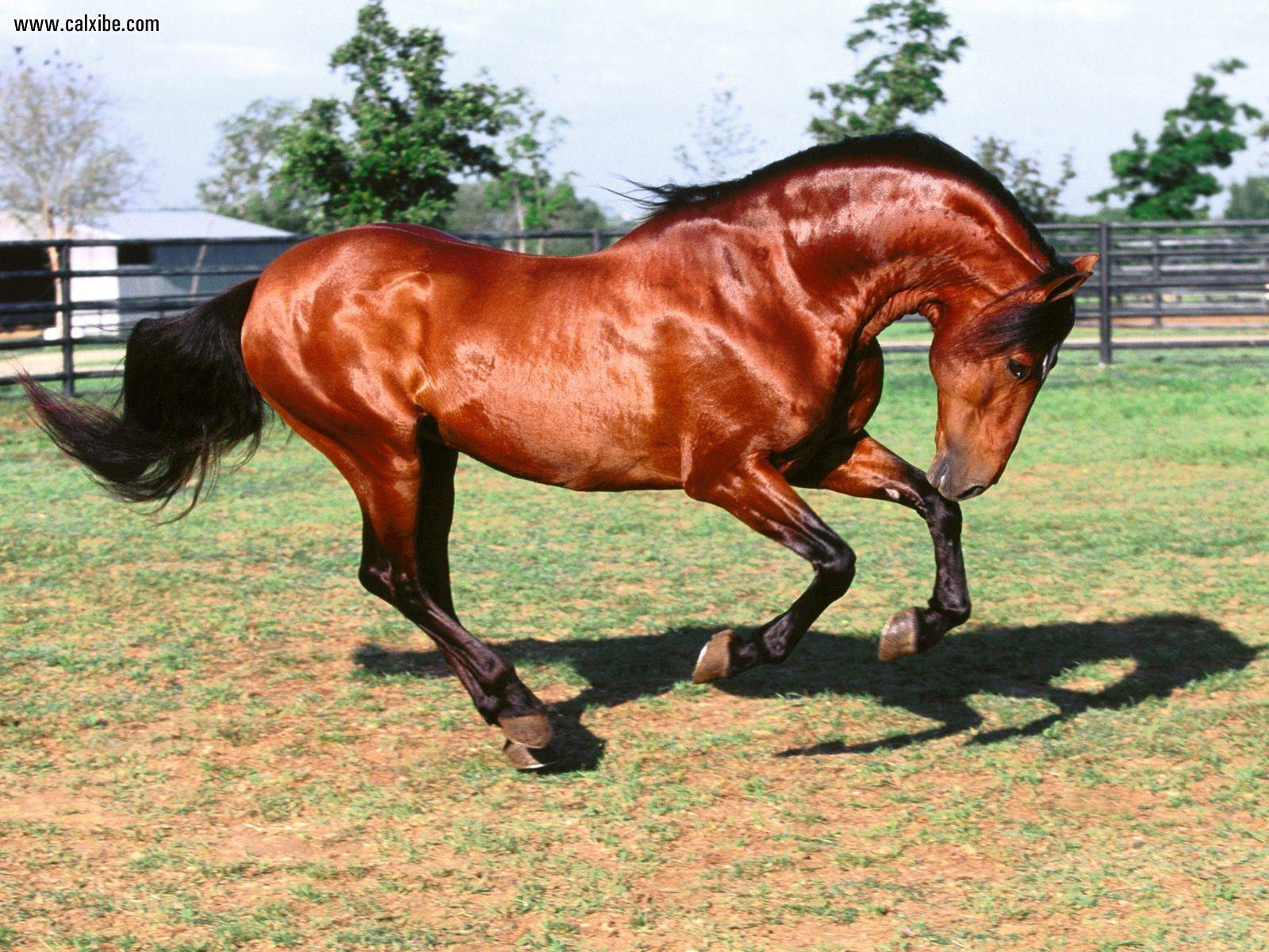 ghinda este otrăvitoare pentru cai
